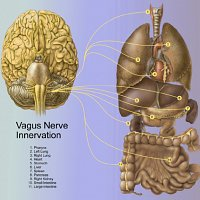 The vagus nerve, emotions and the difficulty with mindfulness practices.